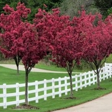 3 rail PVC vinyl white color fence/It's a beautiful and safe fence