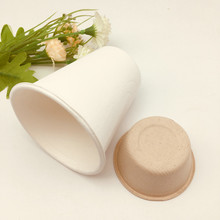 compostable white and natural bagasse cup for hospital