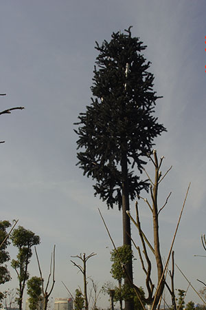 In Communication System Factory price Palm Pine Tree Antenna Tower