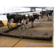 Cattle Farm Manure Clearing System