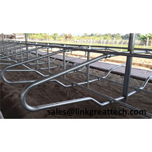 China cattle Free Stall