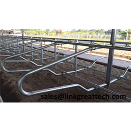 Cattle Farm Dairy Stall