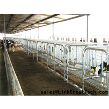 Hot dip galvanizing Cattle Headlocks