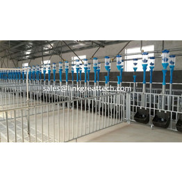 Fattening Large Columns for pig farm