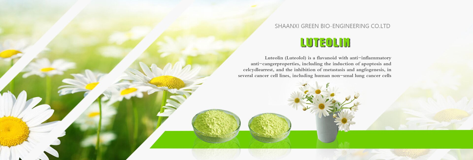 Sophora Japonica Extract Luteolin